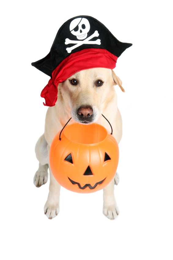 doggie-halloween-costume.jpg
