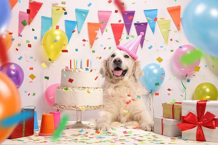 golden-retriever-birthday-party-header.jpg