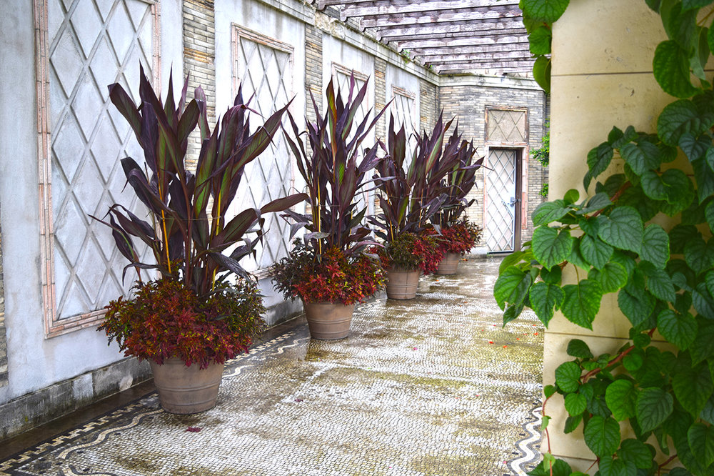 potted plants on marble portico