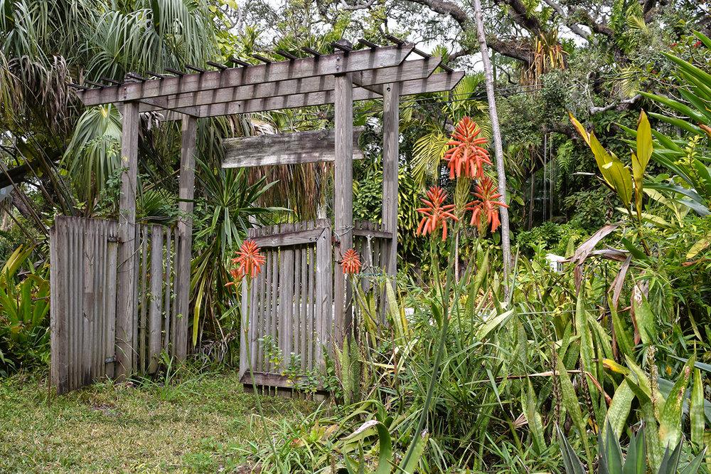 aloe flowers succulent garden