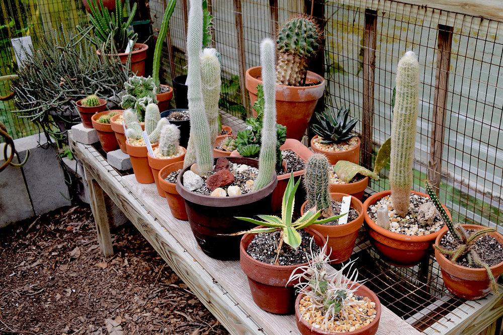 cactus house succulent garden