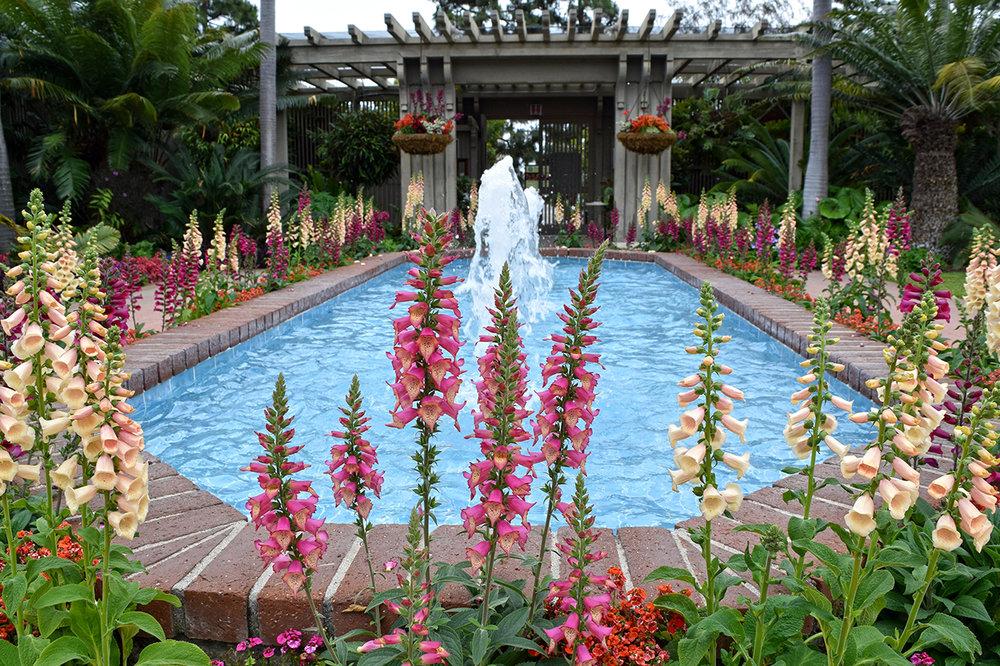 entrance fountain with foxglove flowers