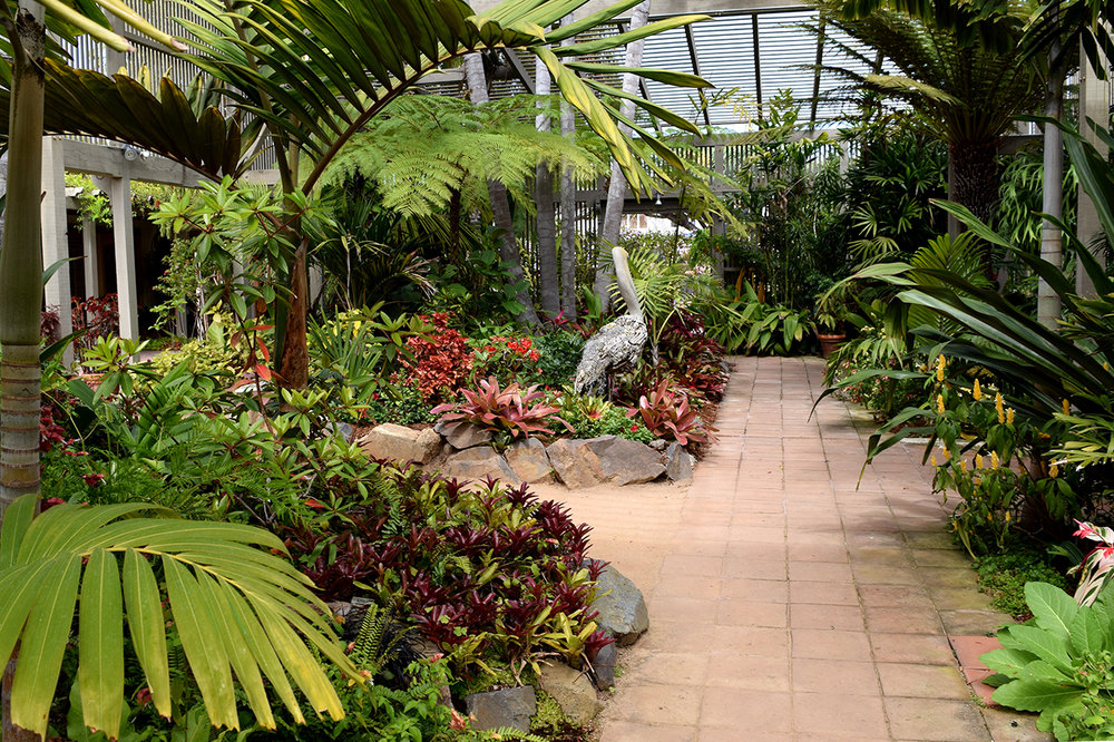 shade house tropical plants