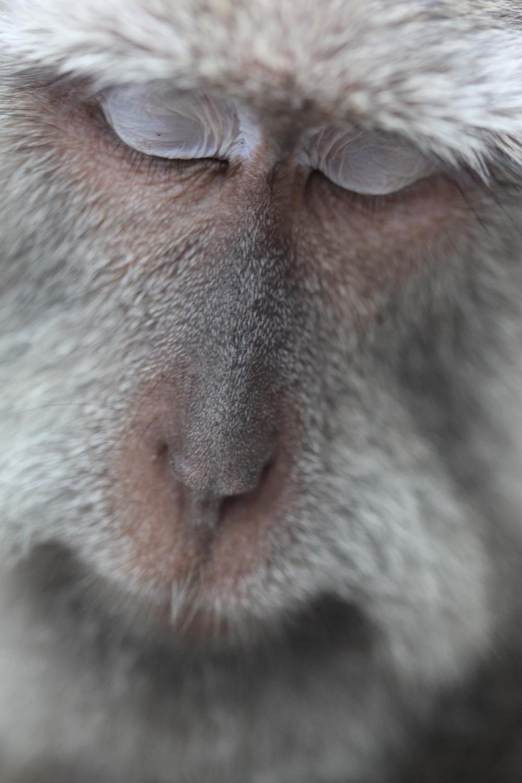 monkey face.JPG
