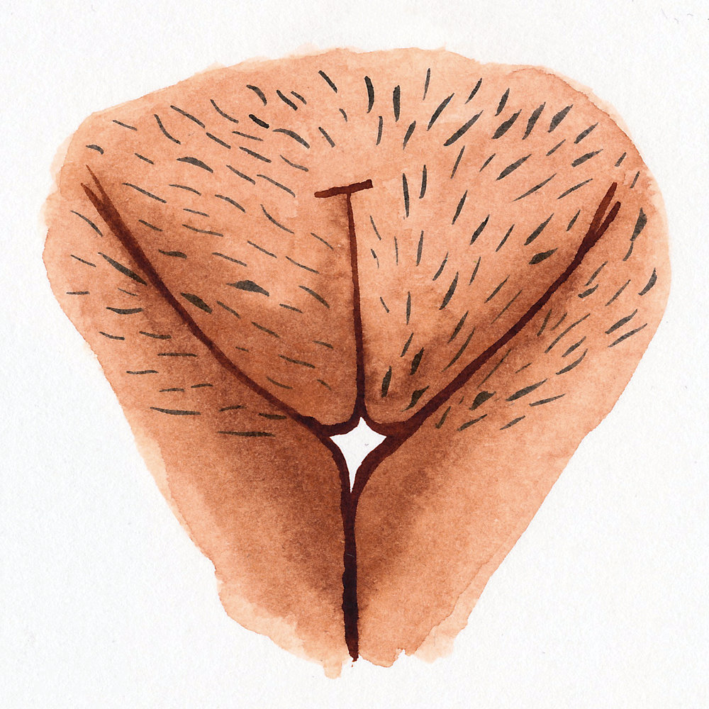 Vulva Gallery Brown34.jpg