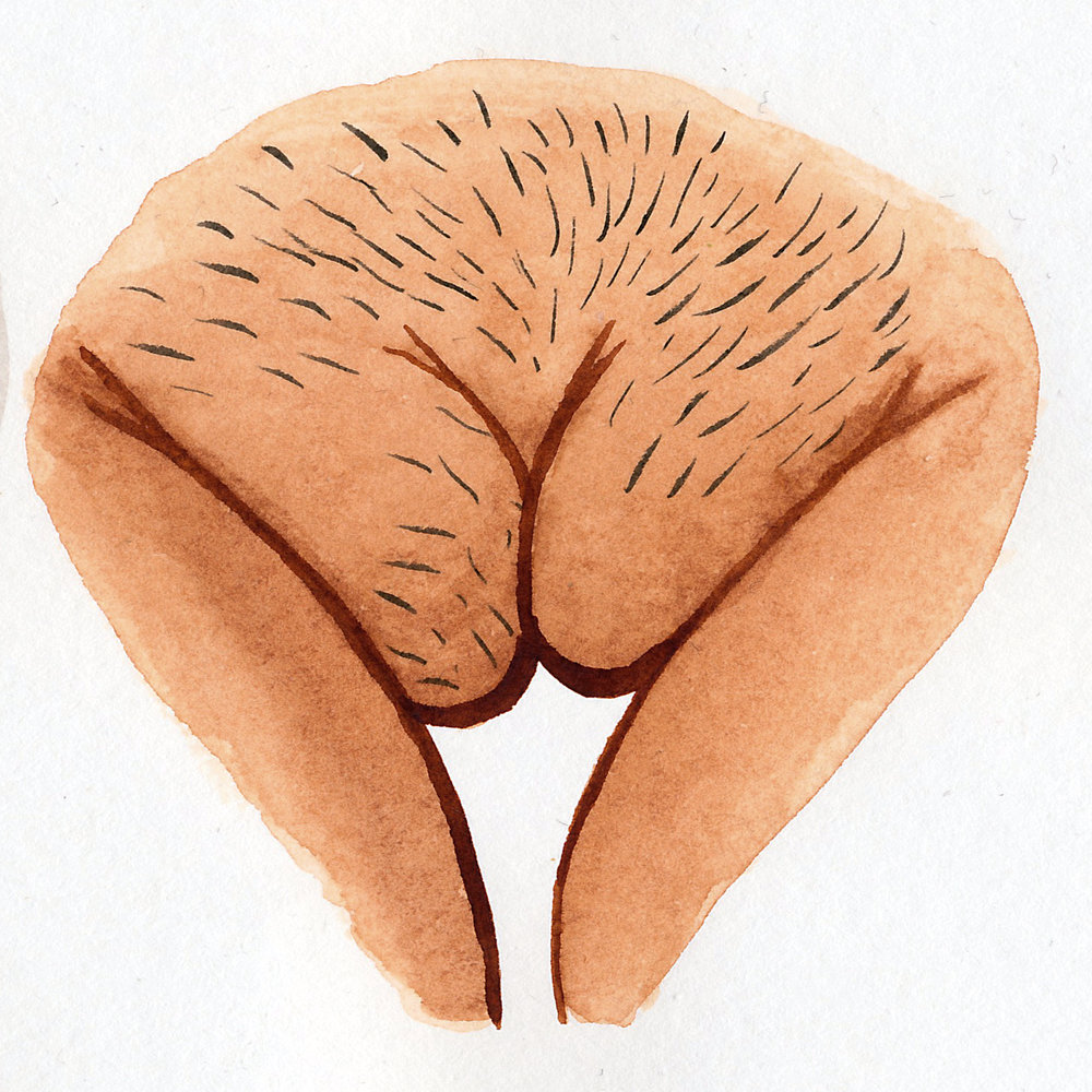 Vulva Gallery Brown43.jpg