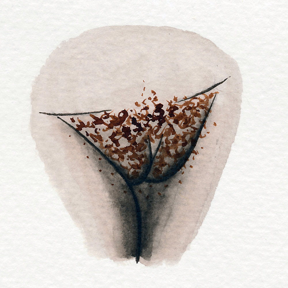 Vulva Gallery Brown76.jpg