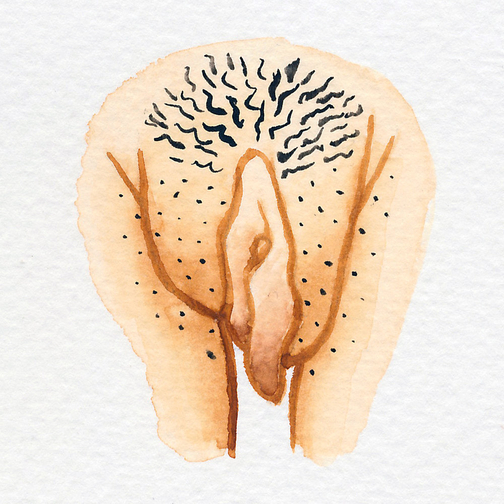 Vulva Gallery Brown83.jpg