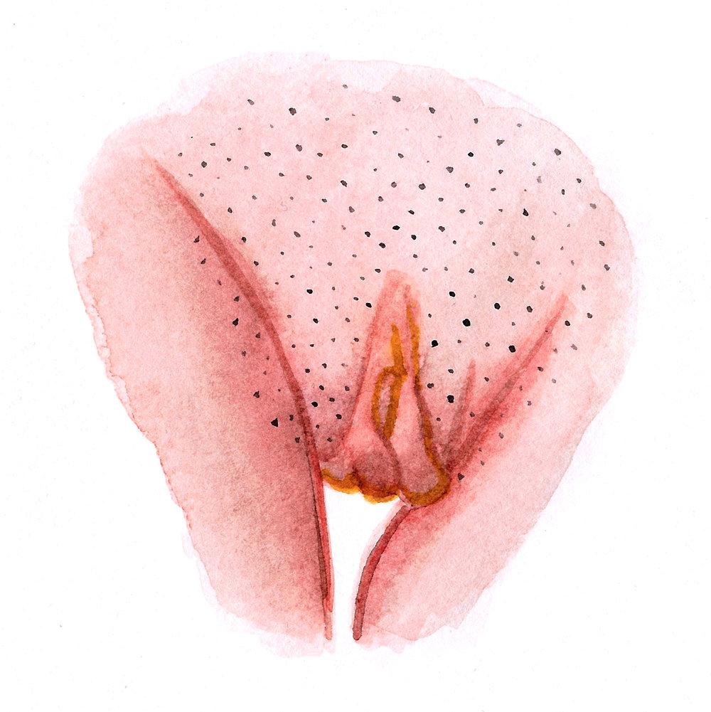 Vulva Gallery Pink39.jpg