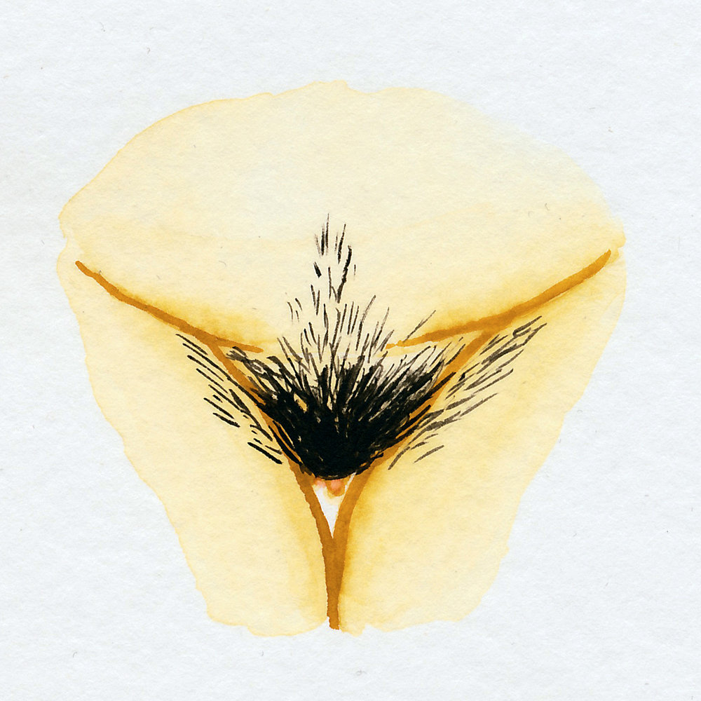 Vulva Gallery Yellow31.jpg