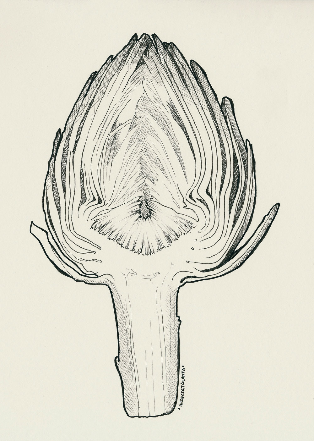 Artichoke I.jpg