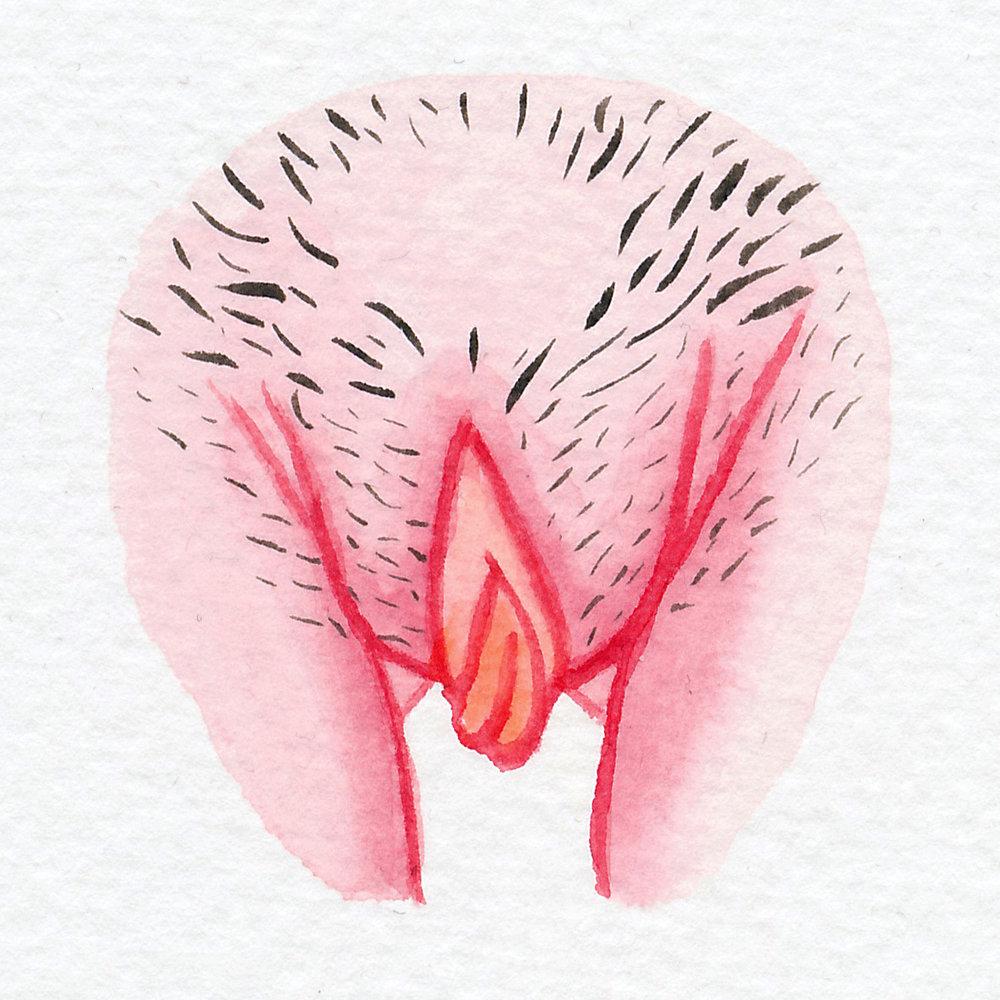 Vulva Gallery Pink86.jpg