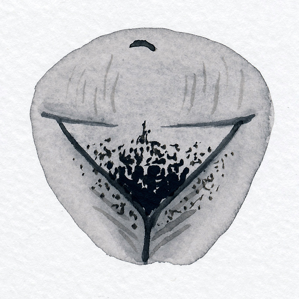 Vulva Gallery Brown107.jpg
