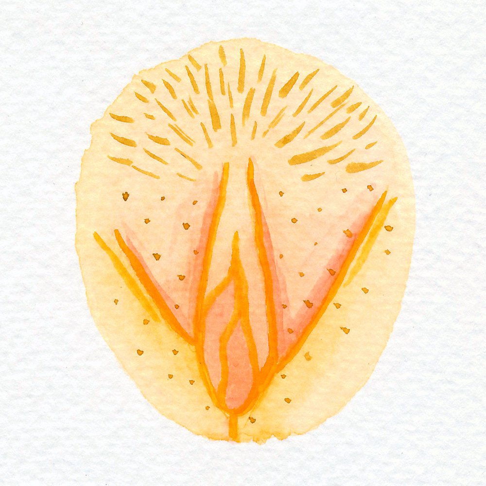 Vulva Gallery Yellow89.jpg