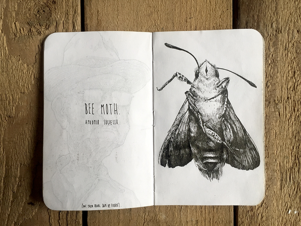 BEE-MOTH-SKETCH.jpg
