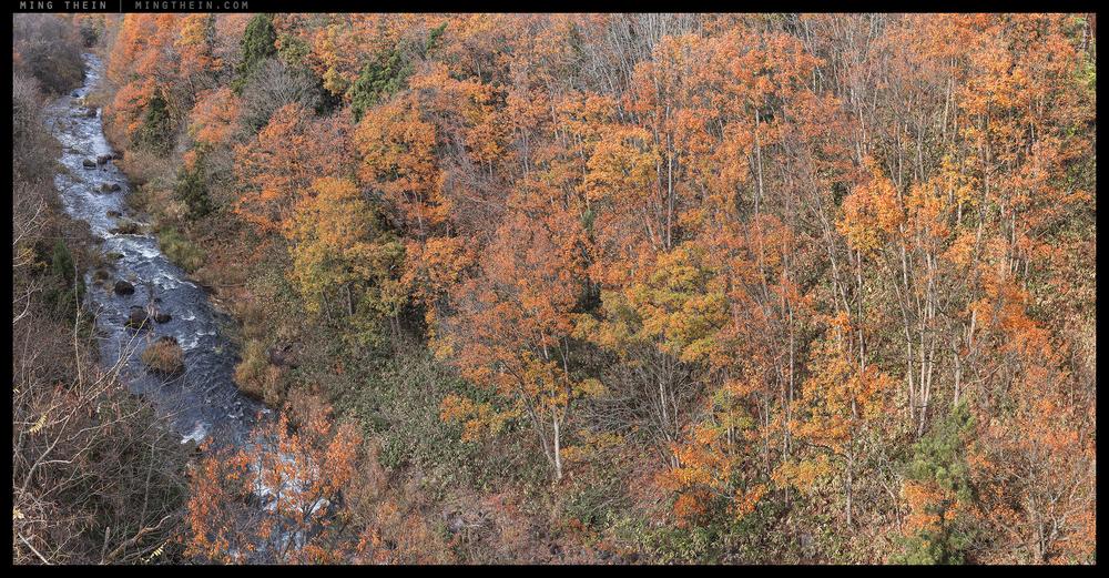 _7R2_DSC4842-7 forest XXXII.jpg