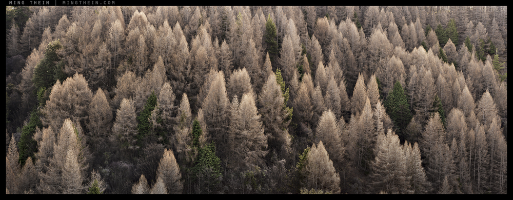 _8B03438-45 forest iii v2.jpg