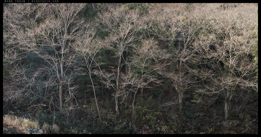 _8B12598-638 forest XII.jpg