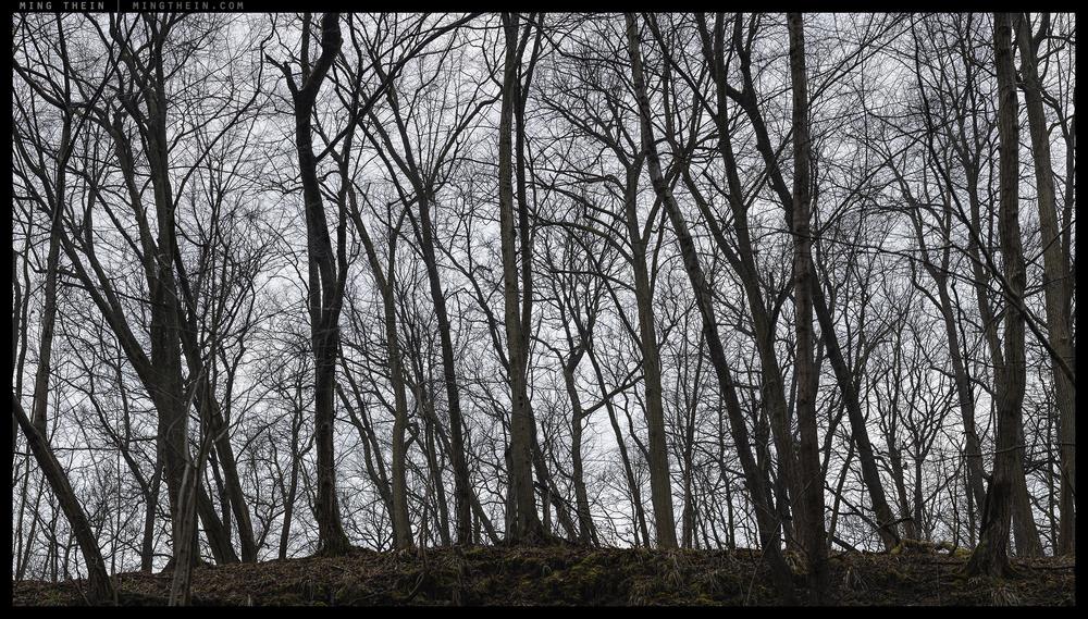 _8B18609__8B18672 15k forest XIX.jpg