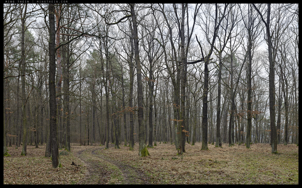 _8B18811__8B18881 15k forest XX.jpg
