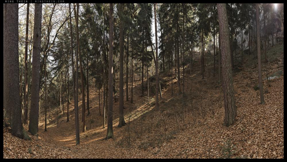 _8B19433__8B19499 15k forest XXIII.jpg