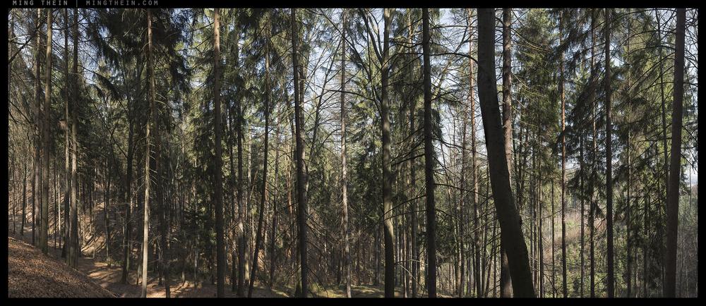 _8B19505__8B19570 15k forest XXIV.jpg