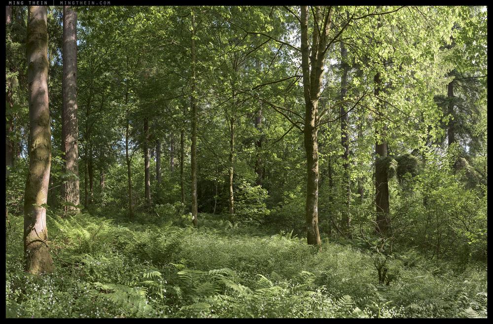 _8B27204-57 forest XXXI 15k.jpg