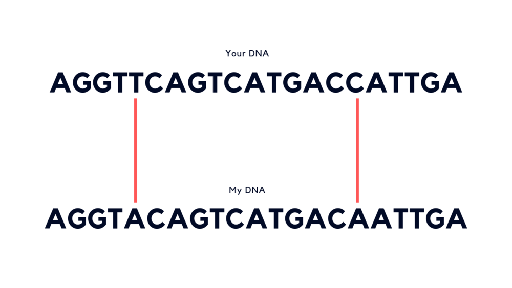 Although most of our DNA is the same, if we looked closely, we'd find a few differences. A difference of 1 letter is known as a SNP (single nucleotide polymorphism).