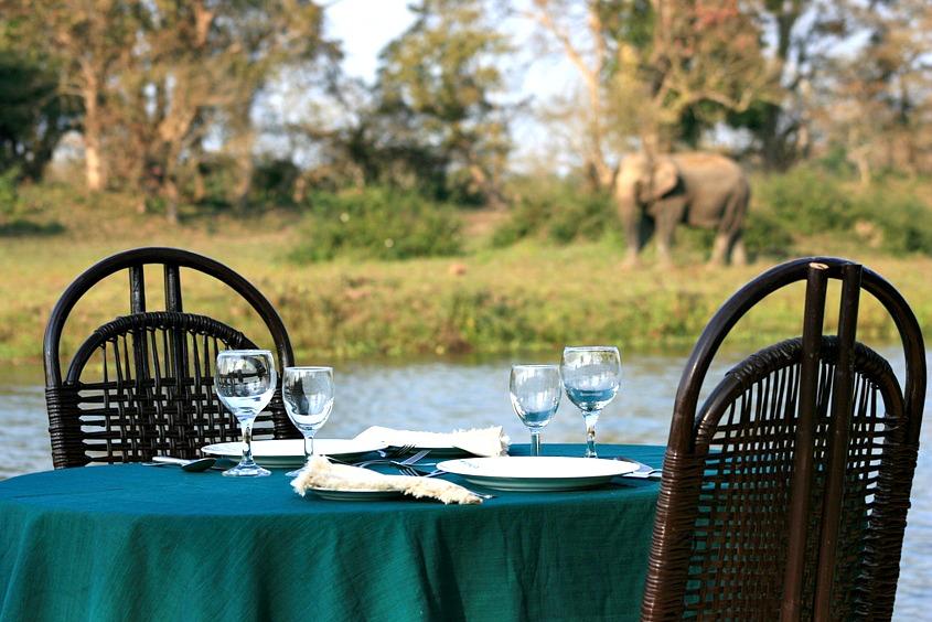 elephant drl.jpg