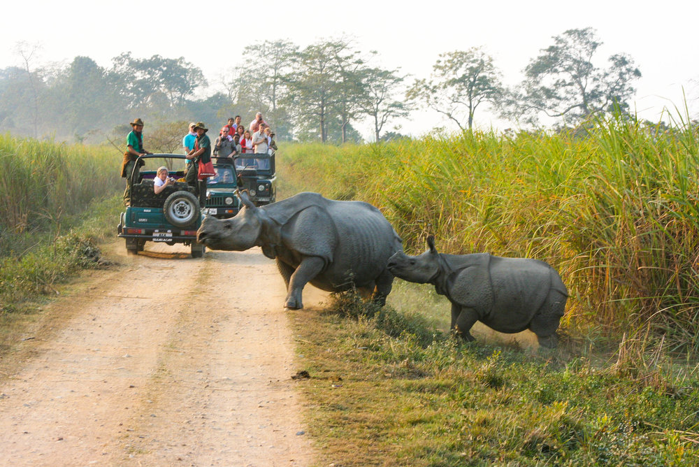A pair of rhinos crossing a path