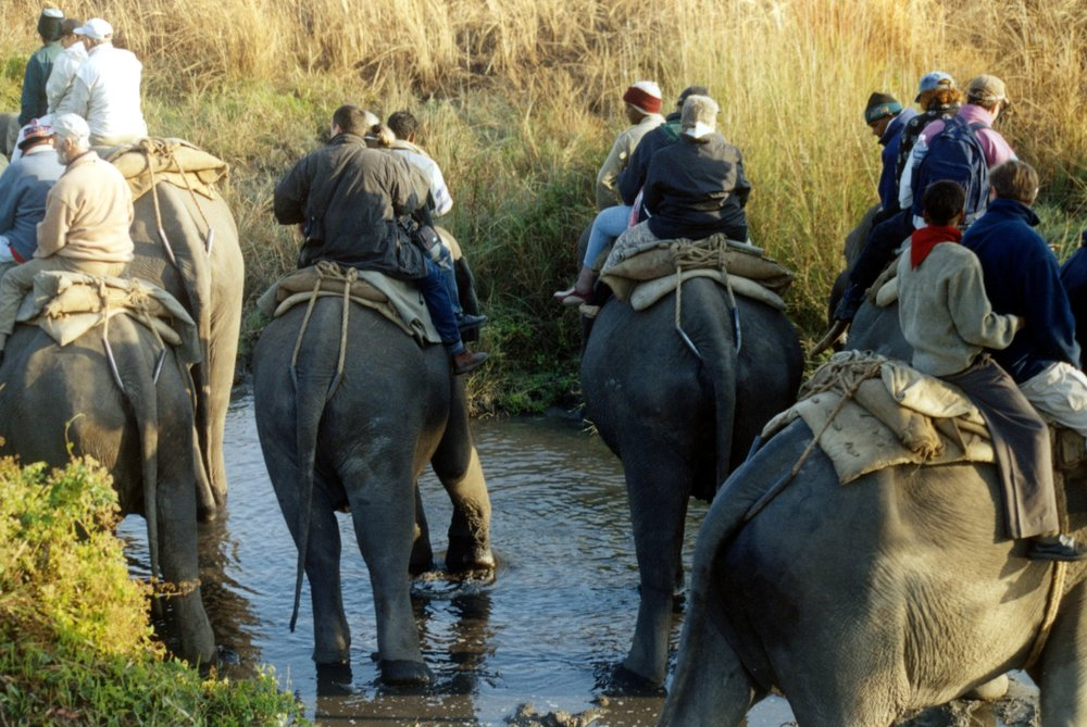 Elephanta ride in Kaziranga.jpg