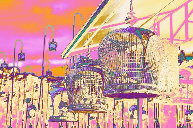 Linda-Preece-Photography-Bird+Cages-Pink.jpg