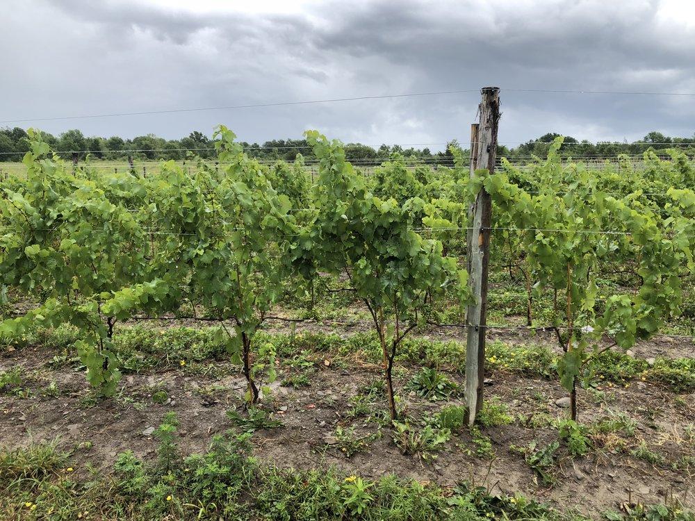 Forge Cellars Winery - Black Building - Vineyard - Finger Lakes - Seneca Lake - Hector, New York