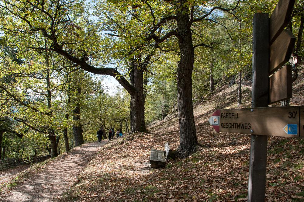 Sentiero delle castagne-2.jpg