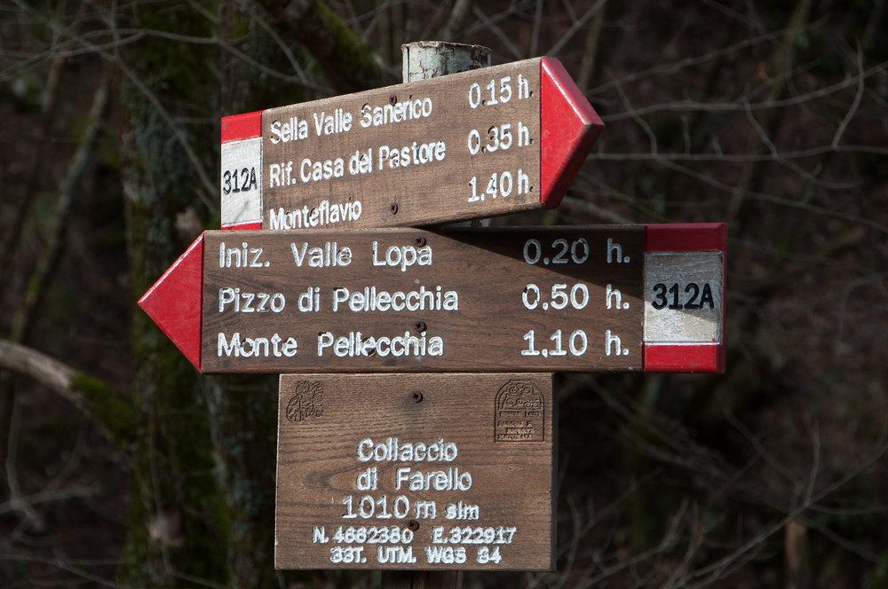 Pellecchia-9.jpg