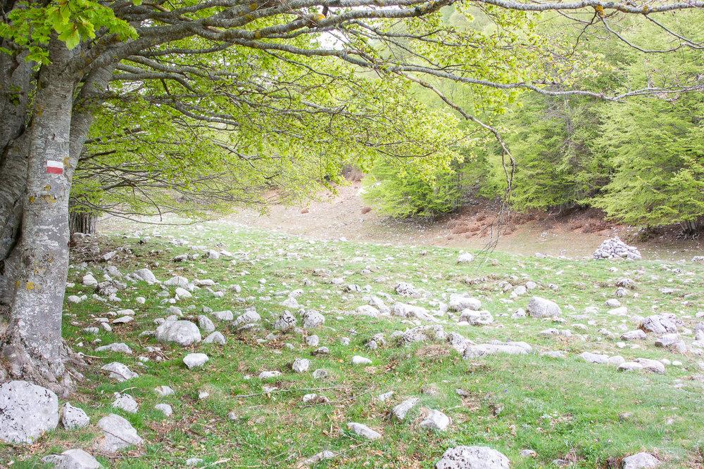 Escursione Monte Meta-4.jpg