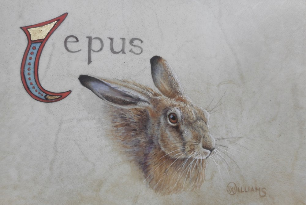 'LEPUS' Watercolour and gold leaf on vellum.  Size -10cm x 15cm.  Price - £500