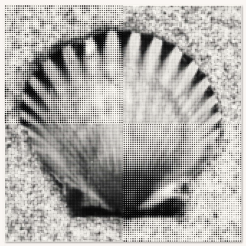 Scallop Shell - LARGE.jpg
