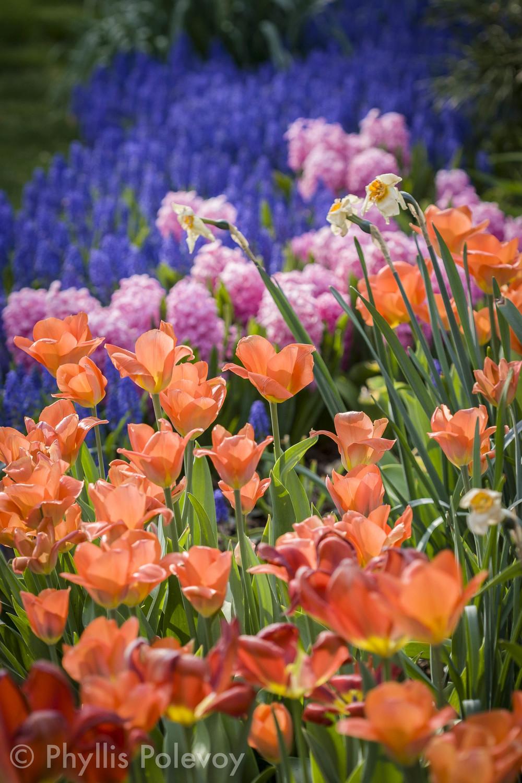The Gardens, #014