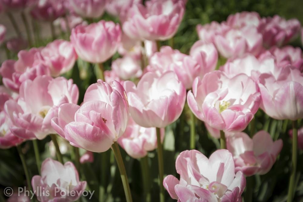 Phyllis Polevoy - The Gardens, #001