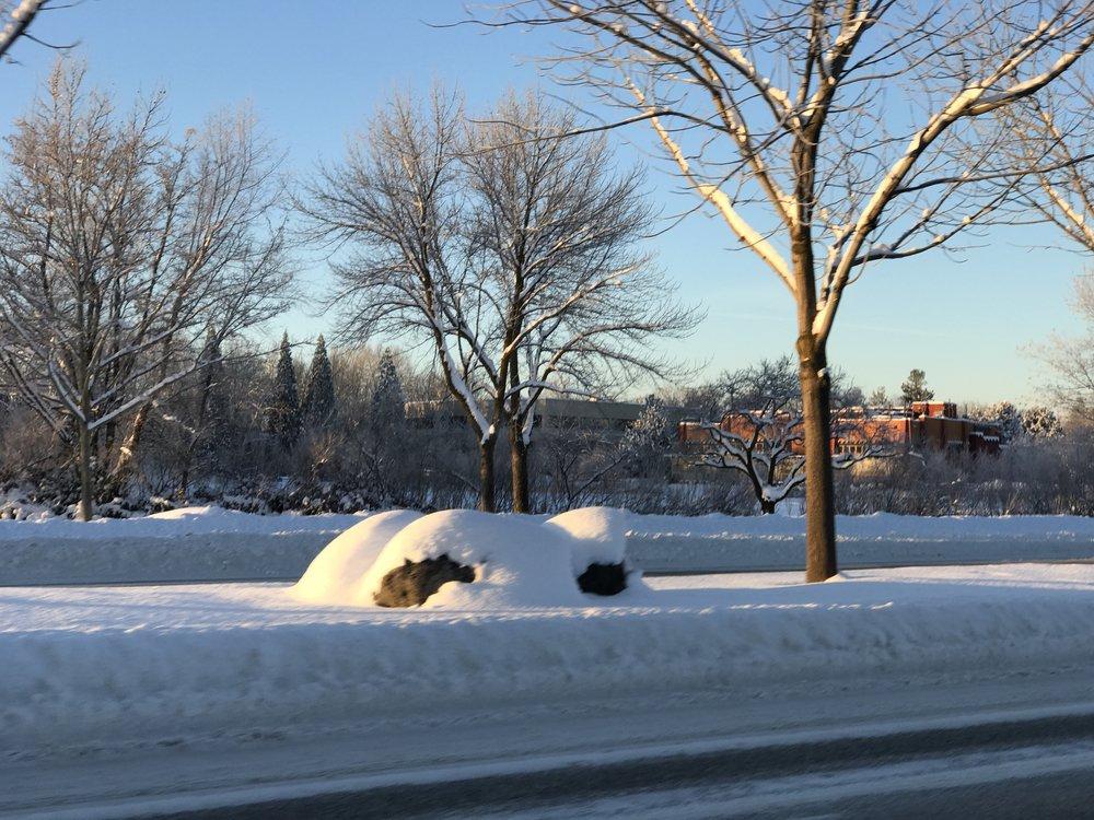 Pretty - oh so pretty... annoying. Photo: Don Day/BoiseDev.com