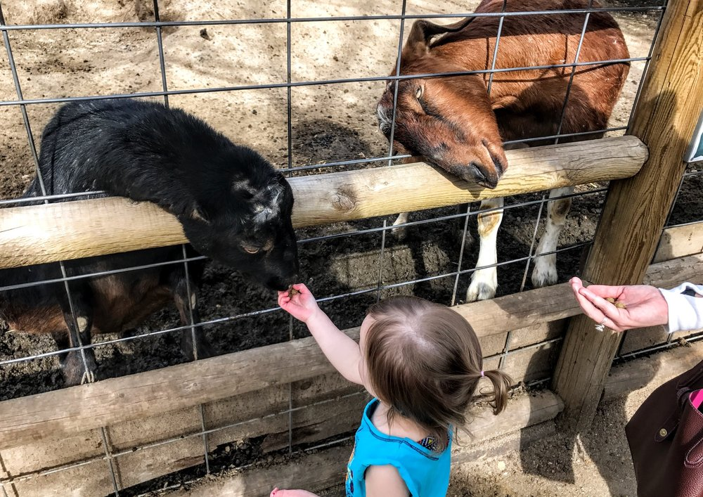 A young zoo visitor feeds animals during a visit this spring. Photo: Don Day/BoiseDev.com