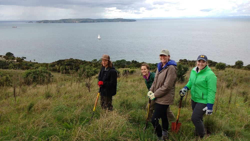 Invasive species removal in Shakespear Regional Park outside of Aukland, NZ