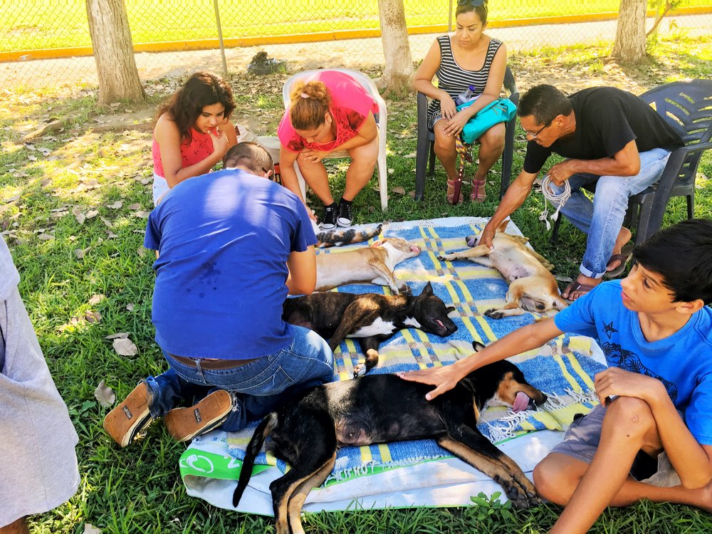 Photo of dogs & cat recovering shortly after their spay/nueter by a wonderful traveling Veterinarian in PV.