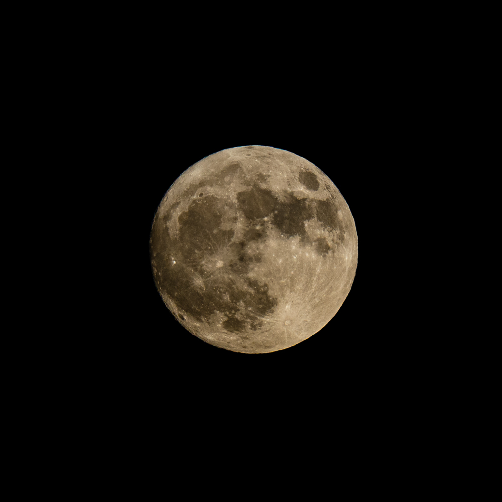 "The ""Beaver Super Moon"" photographed using a 300mm Nikkor f2.8 EDIF !!,  fitted with a 2x teleconverter.     ISO1600 f11 1/500"