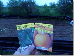 tops of cups for squash and pumpkins (1)