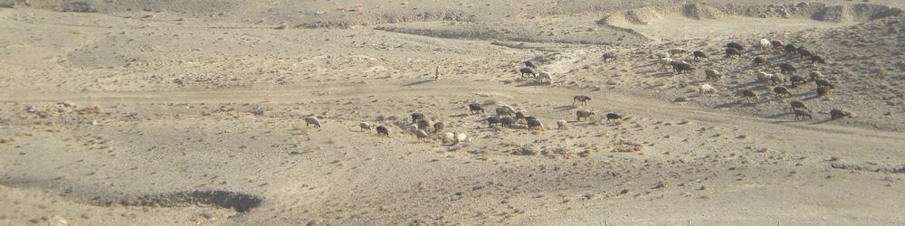 Family tending their flock,Sharana, Afghanistan