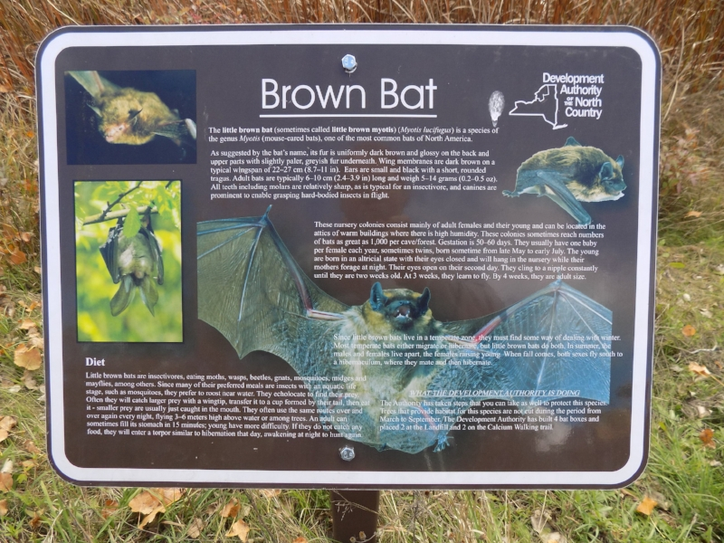 A brown bat information sign in upstate New York. Brown bats are the most common bats in the US and are insectivorous.