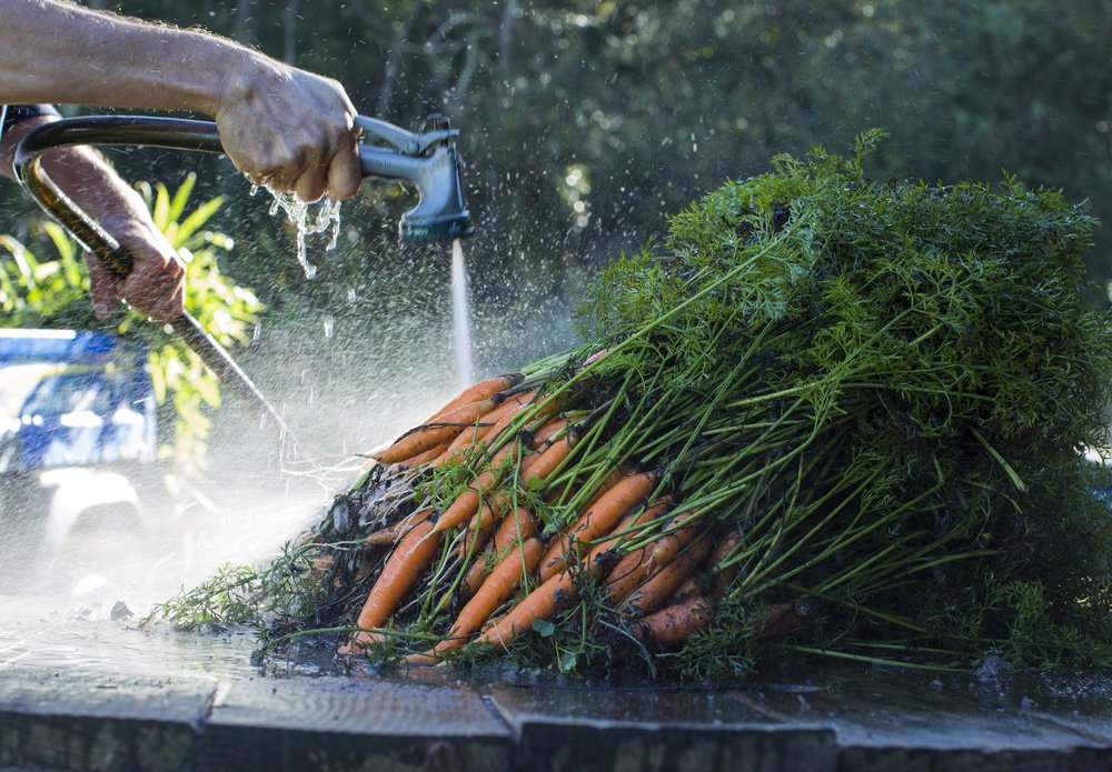 John Wood washes carrots at Homecoming Farm in Amesville, Ohio, on October 20, 2017.