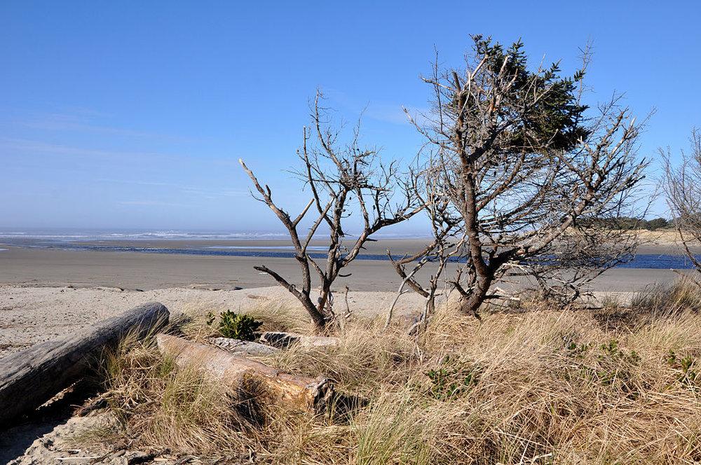 1024px-Ona_Beach_State_Park.jpg